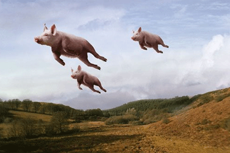 See there's no such thing! Picture taken from our backyard on November 19, 2012We can not confirm nor deny that pigs can fly. That's on a need to know basis. But they are FDA Approved