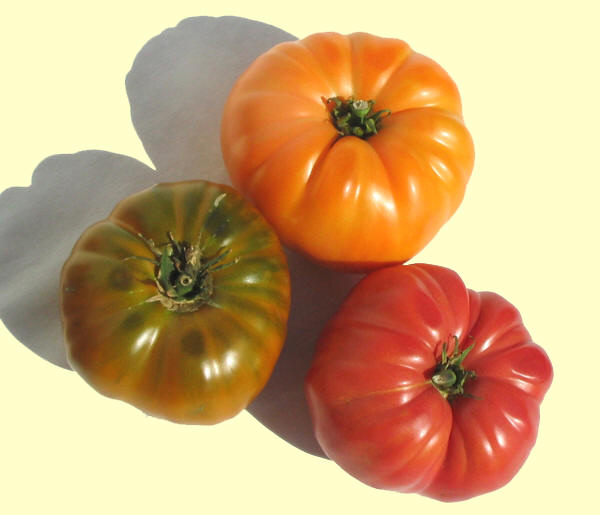 There are more Heirloom tomato varieties then you can shake a GMOZ at.