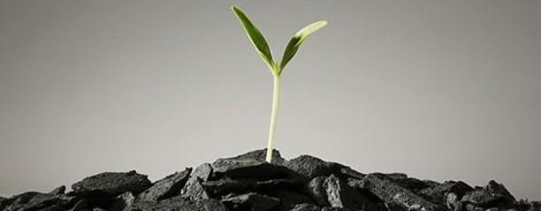 Biochar Plant Steroids