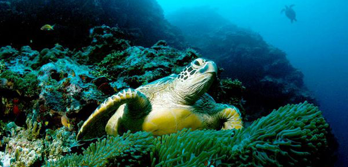 Turtle Wisdom in the Sea