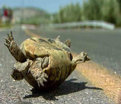Turtle WisdomHELP!
