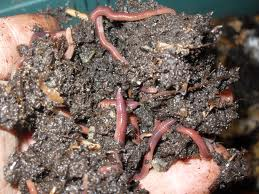 All About Worms They are Natures Miracle