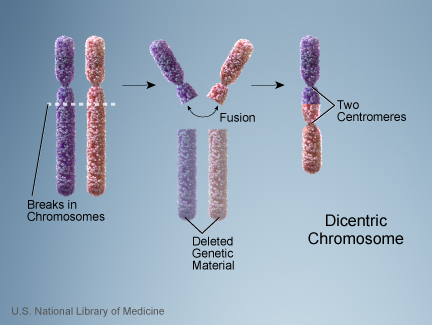Changing Human Form Chromosome2 in Humans was fused