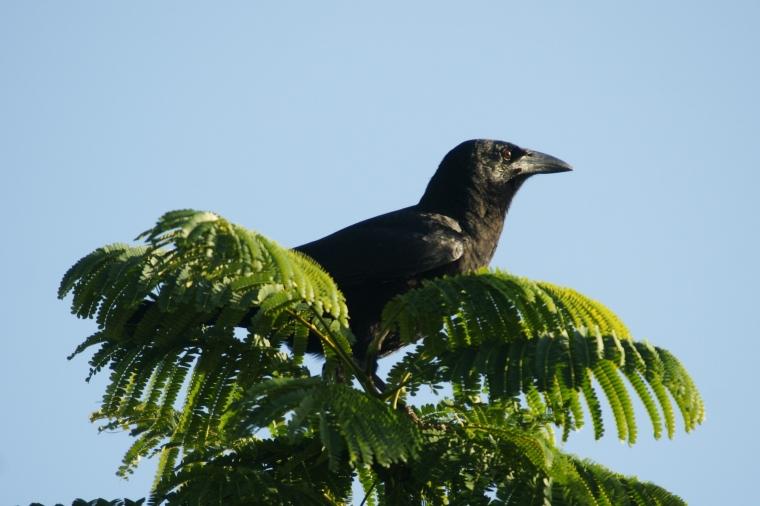 Crow Medicine Doowans News Amp Events