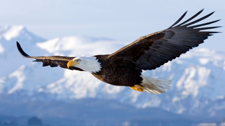 Eagle toughing the Great Spirit