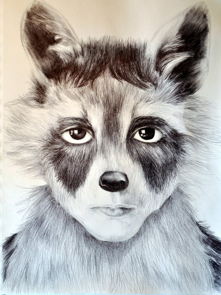 Raccoon Medicine – Doowans News&Events Raccoon Drawing