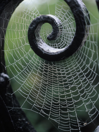 Spider web and Iron