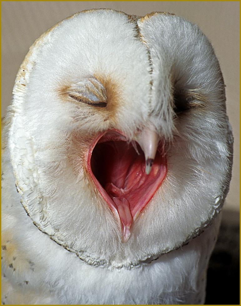 Owl Medicine - Doowans News&Events