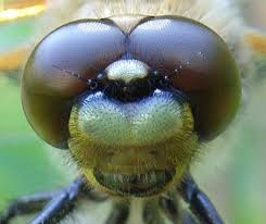The face of Dragonfly