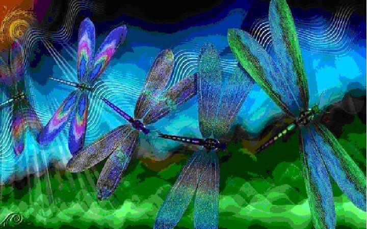 Dragonfly Medicine – Doowans News&Events