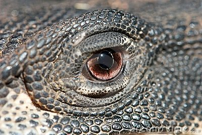 Eye of a Lizard