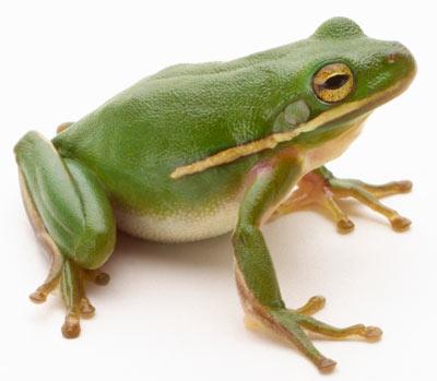 Frog Medicine