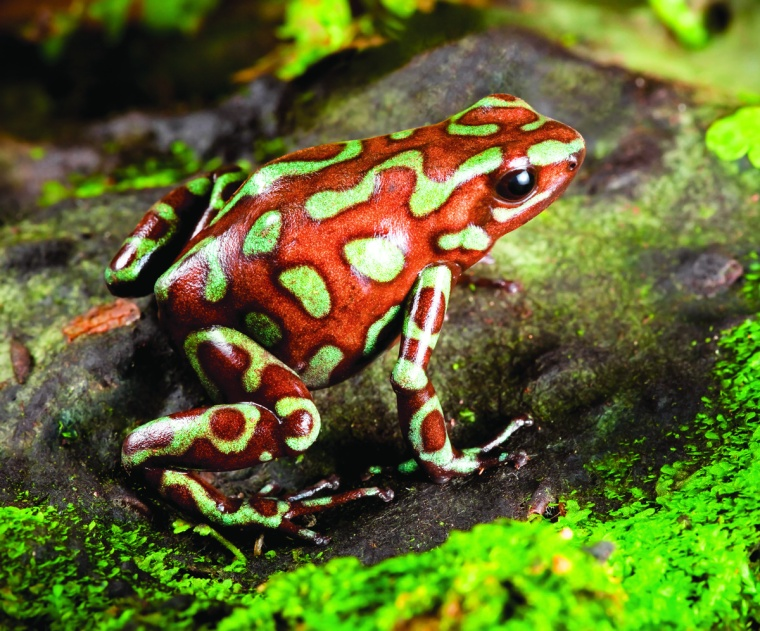 Frogs can be used for Medicine Good and Bad
