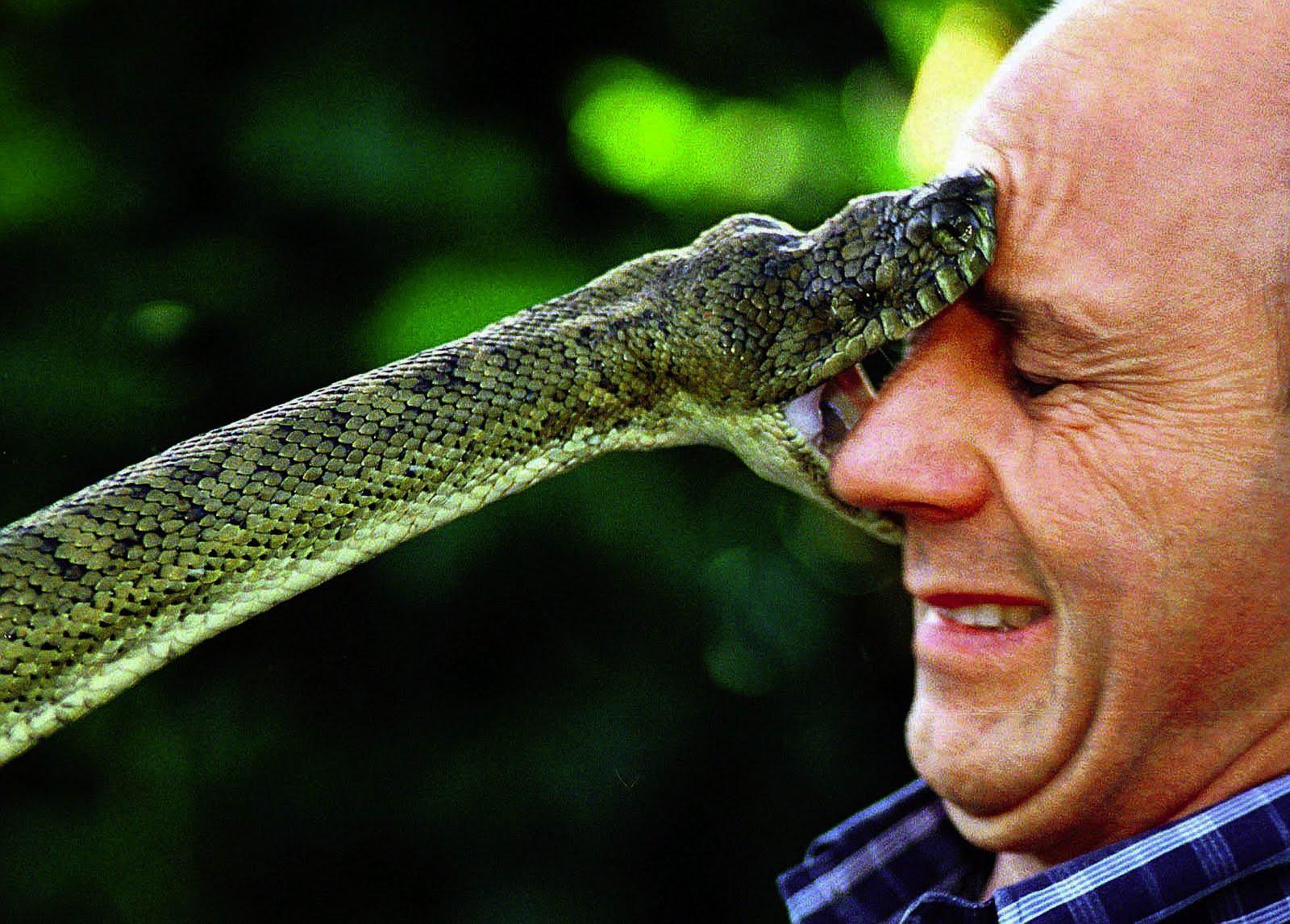 Snake Medicine – Doowans News&Events