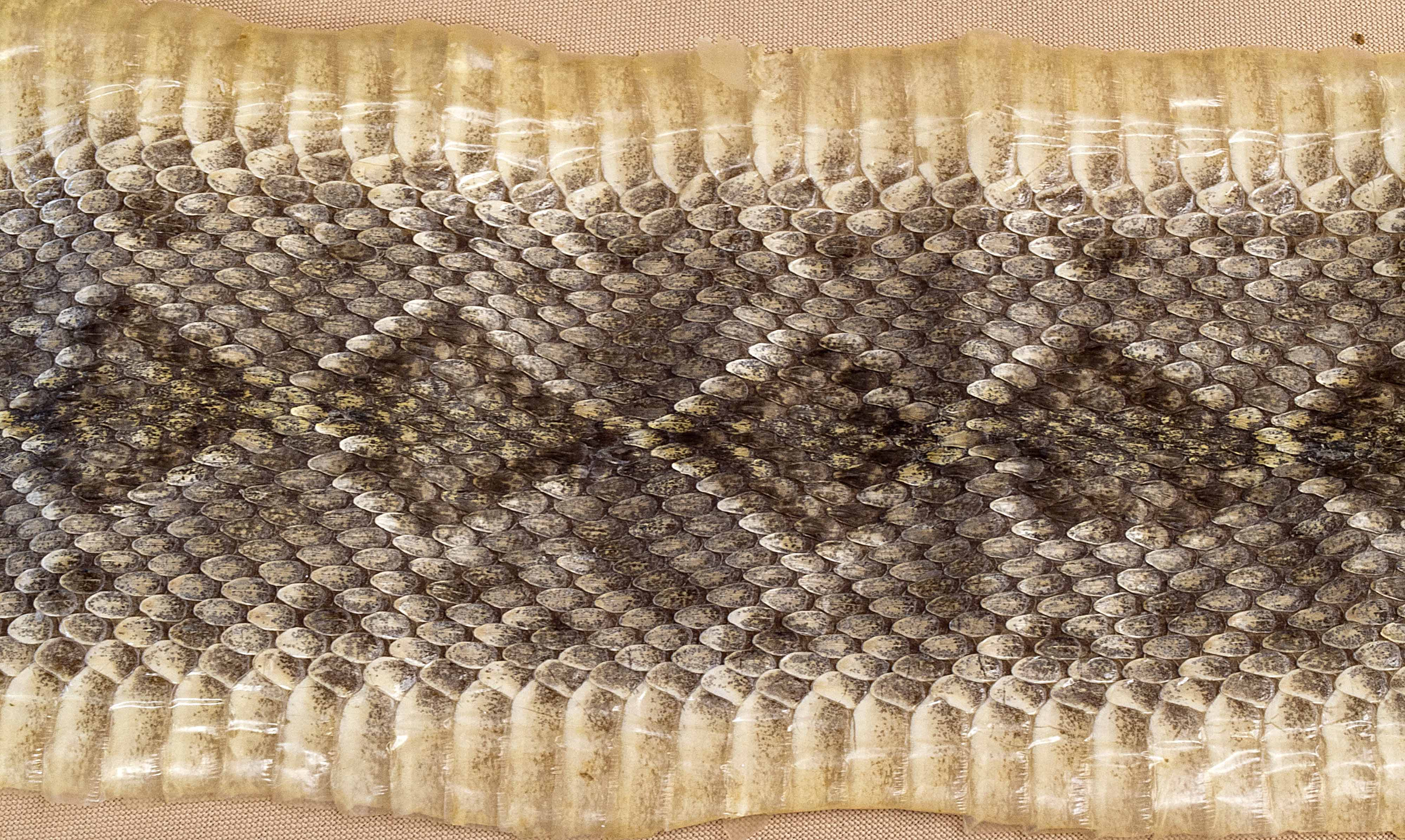 how to take care of snakeskin