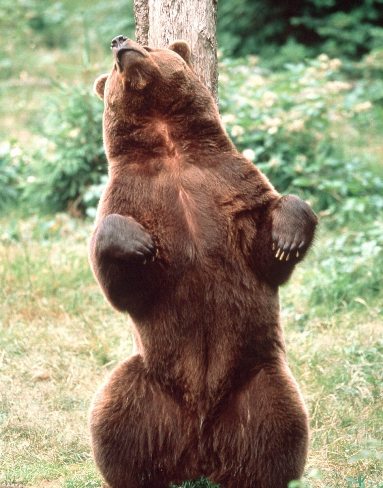 Bear Medicine Won't rub you the wrong way