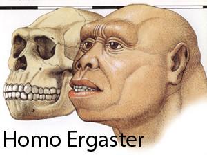 Daniel Schaan image of Homo Ergaster