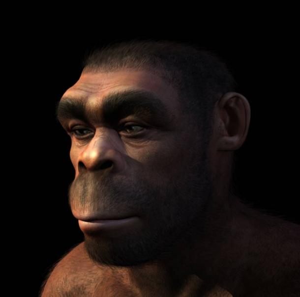 Portrait of a Homo erectus male. Source: BigStockPhoto