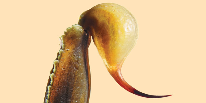 ScorpionMedicine Stinger