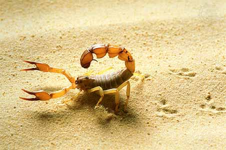 Scorpion medicine on Sand